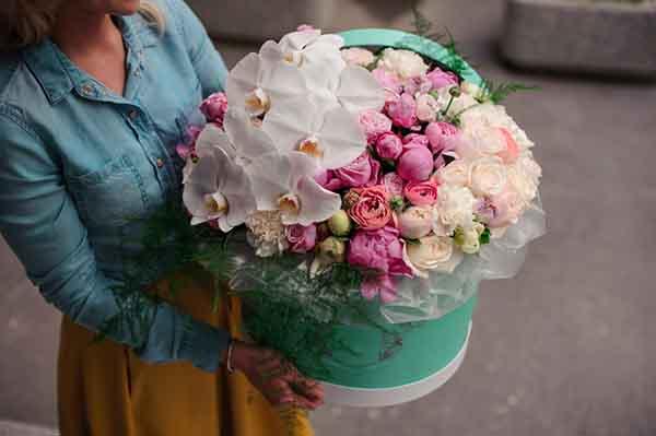 Hoa màu trắng khai trương