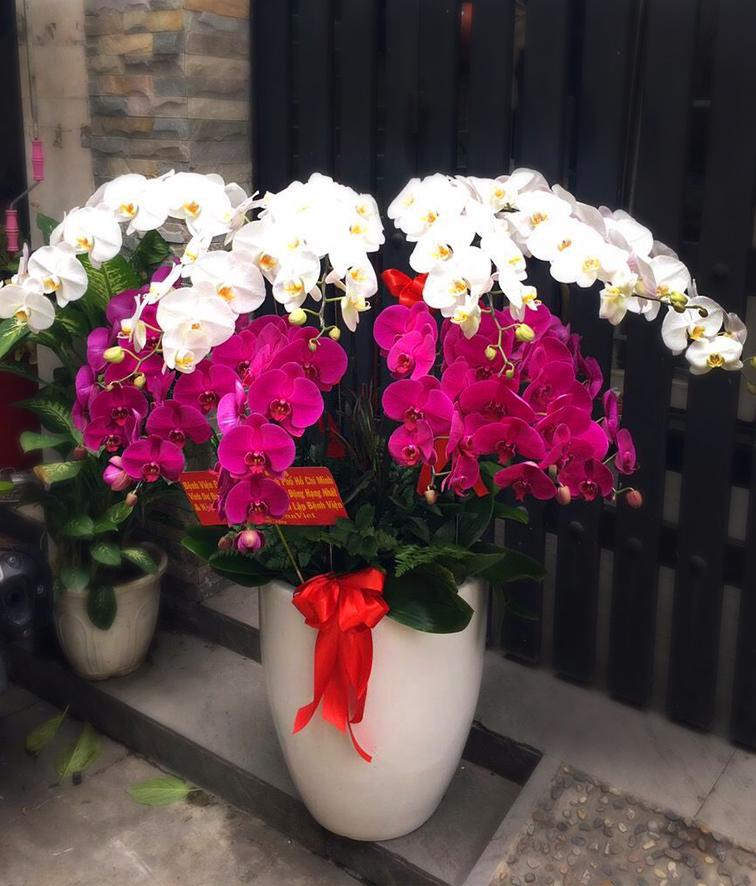 Hoa lan tình yêu