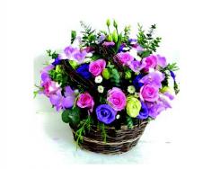 Vườn hoa nhà nàng