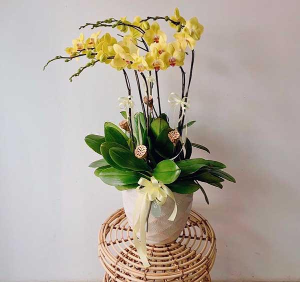 Nhập hoa Lan