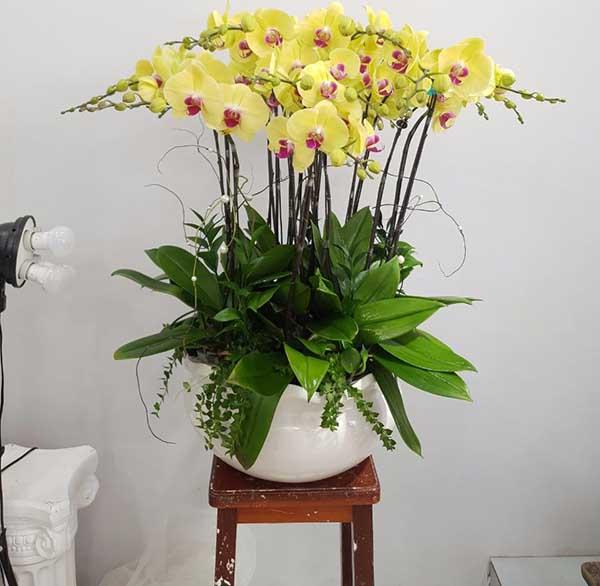 Đặt hoa lan