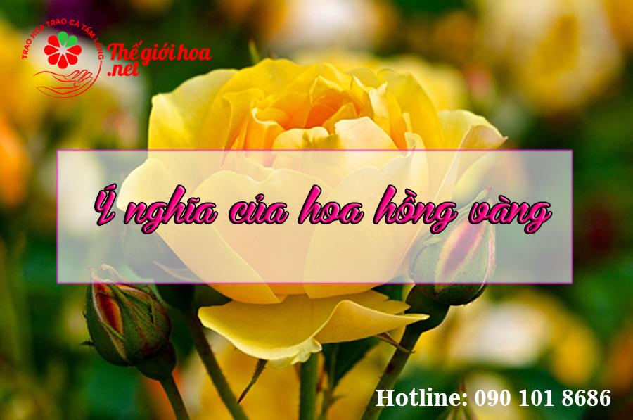 ý nghĩa hoa hồng