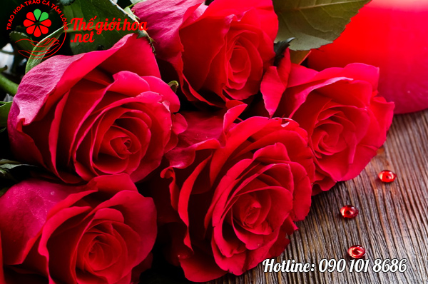 phong thủy hoa hồng