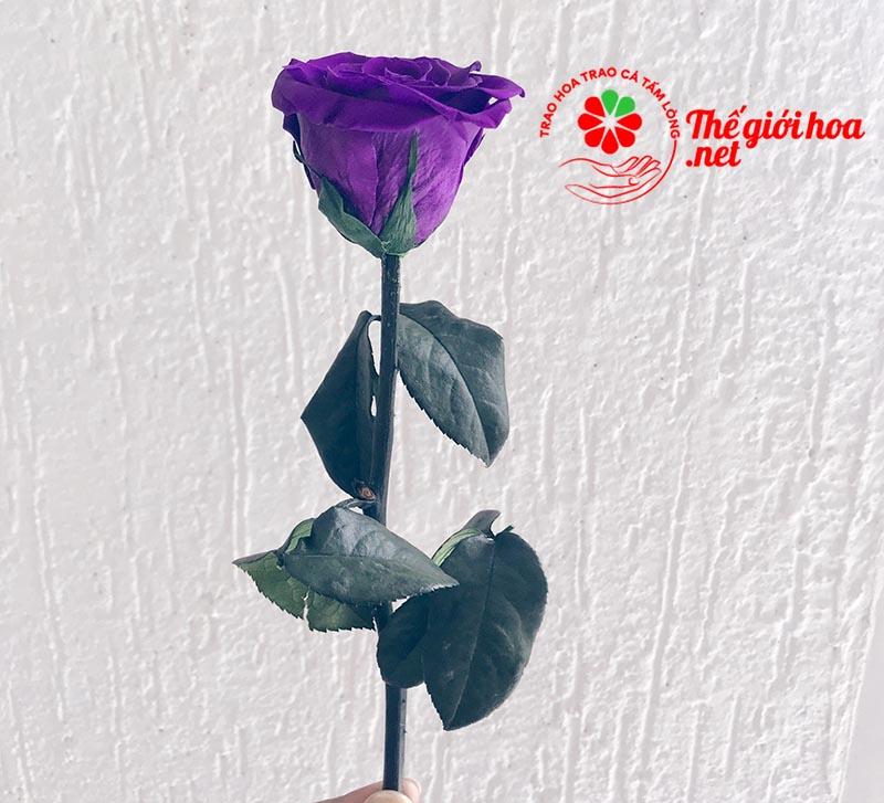 Ý nghĩa hoa hồng tím