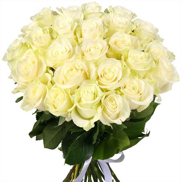 Hoa hồng Ecuador trắng