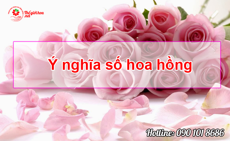 ý nghĩa số hoa hồng