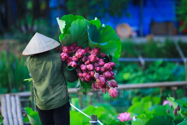 ý nghĩa hoa sen trong đời sống