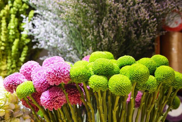 hoa pingpong