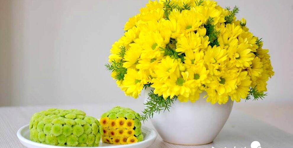 hoa cúc tươi lâu