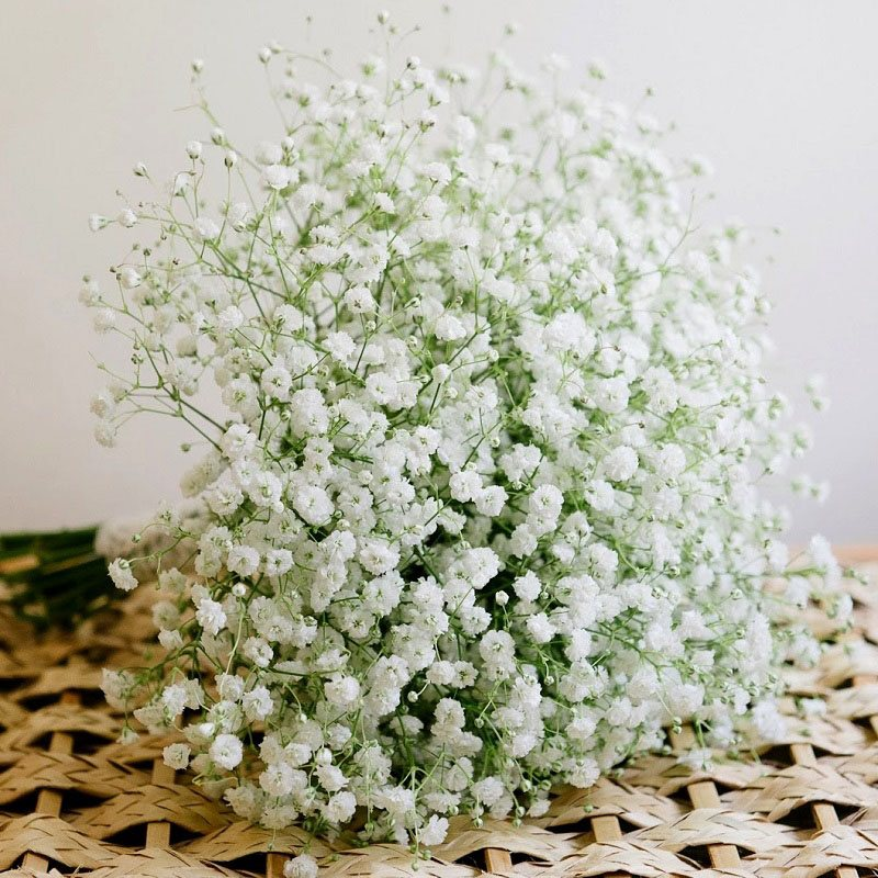 hoa bi trắng