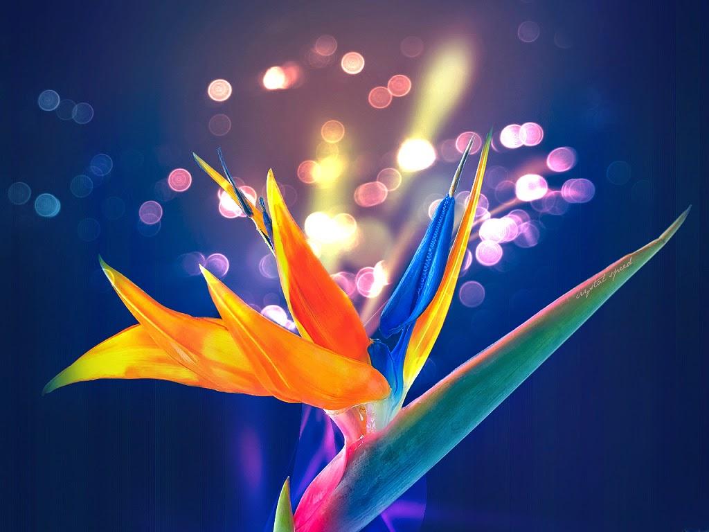 ý nghĩa của hoa thiên điểu
