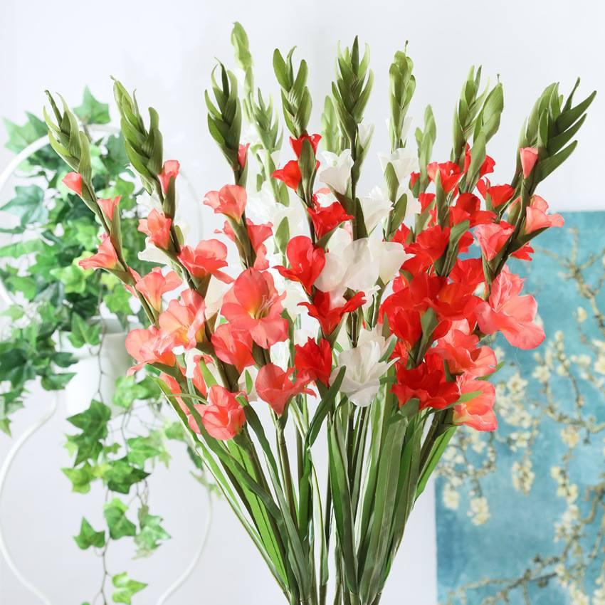 đặc điểm hoa lay ơn