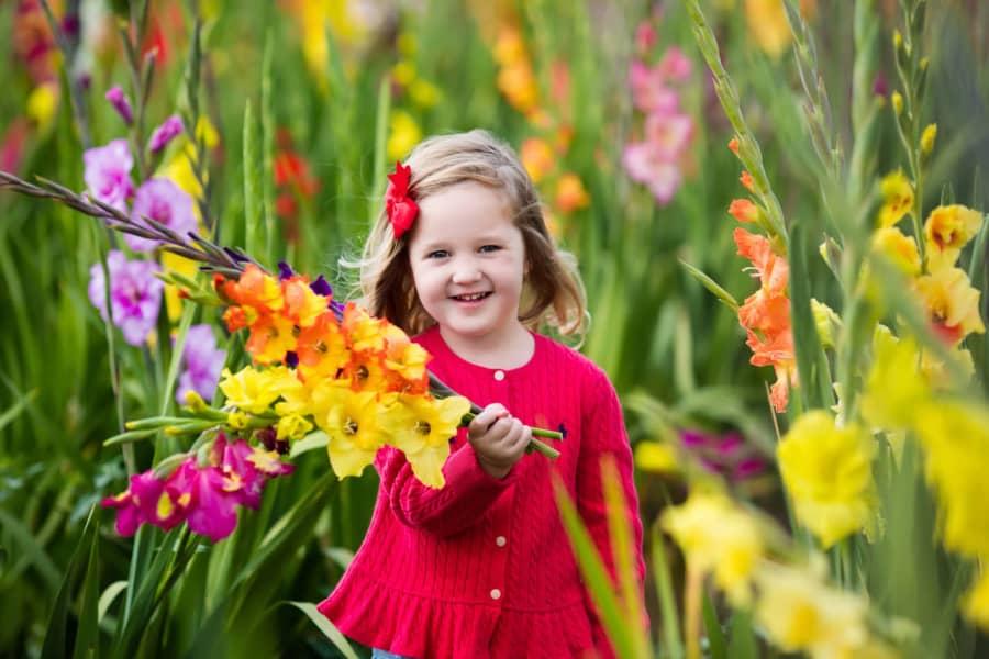 ý nghĩa hoa lay ơn theo màu hoa
