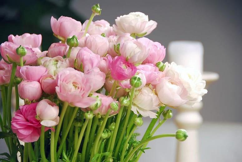 hoa mao lương